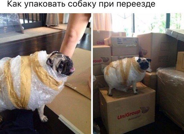 Как упаковать собаку при переезде