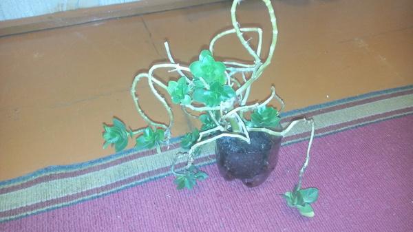 """К лиге """"растениеводства"""" Растения, Название"""