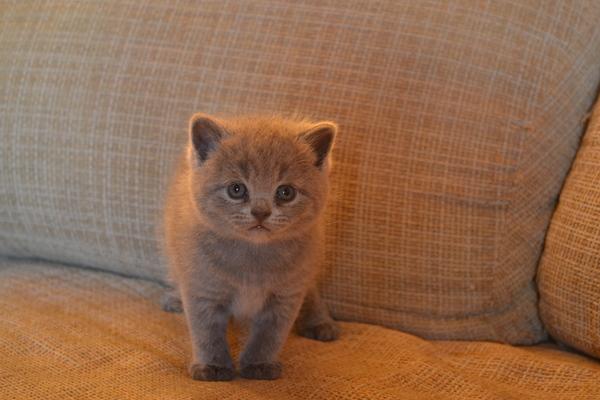 Необычный котёнок Пополнение, Котшечка, Маленькая лань, Кот