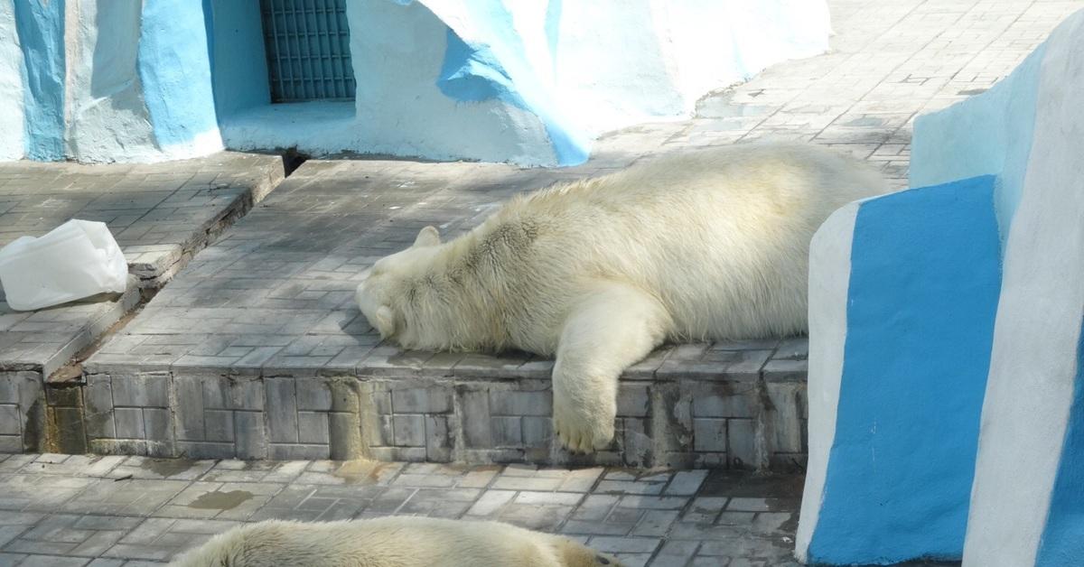 смешные картинки с медведями которые спят обучения
