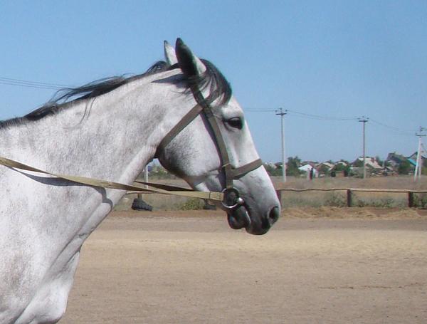 У нас есть кобыла с короткой нижней челюстью кони, лошадь, челюсть, видео, длиннопост