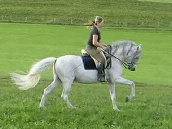 Аллюры лошади, правильный подъем Лошади, Аллюр, Рысь, Галоп, Шаги, Иноходь, Верховая езда, Конный спорт, Гифка, Длиннопост
