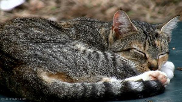 Жизнь моего кота Кот, Гифка, Жизнь, Длиннопост