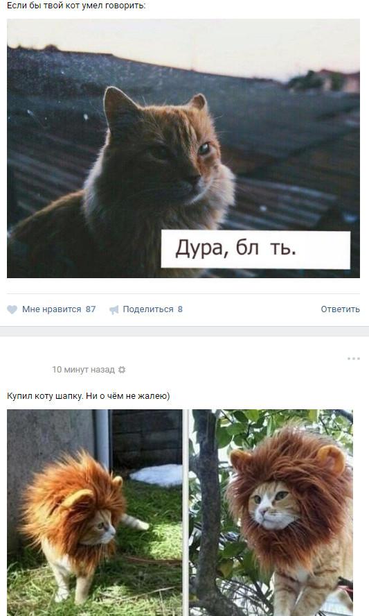 Совпадения вконтакте не случайны... ВКонтакте, Кот, Бред, Скриншот, Социалка, Мат, Совпадение