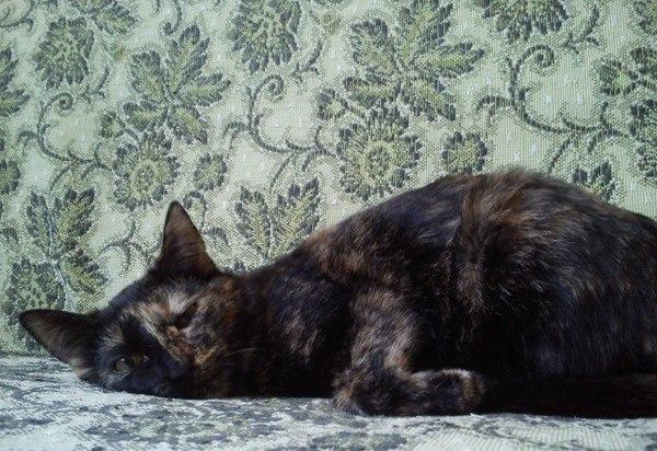 Котики ищут домики (Самара) Кот, Дом, Длиннопост