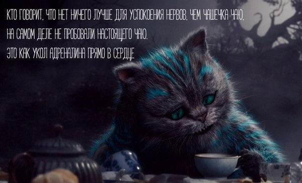 Кот цитаты из фильма