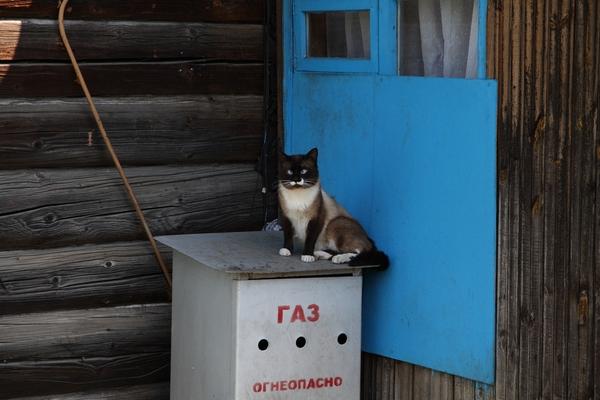 А у нас в квартире газ, а у вас? Кот, Фото, Canon, Полоцк, Усы