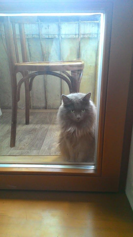 Моя кошка Кот, Котейка злюка, Длиннопост
