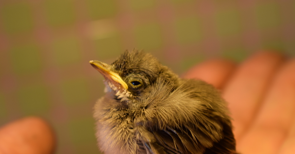 тонких икр птенцы желтых птиц фото и название это создание