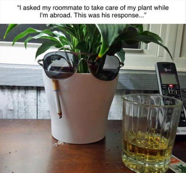 Попросил соседа по комнате позаботиться о своем цветке, пока я за границей. Вот, что он ответил...