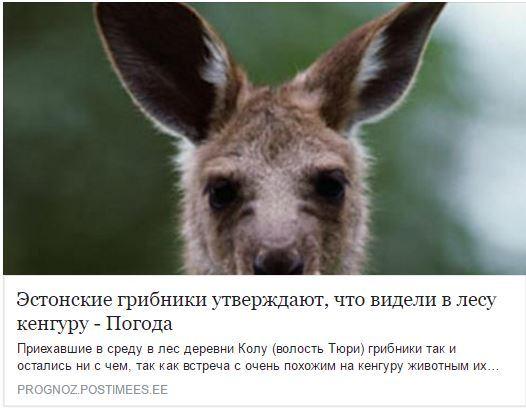 Тем временем в эстонских лесах ... Эстония, Не политика, Грибы, Лес, Кенгуру
