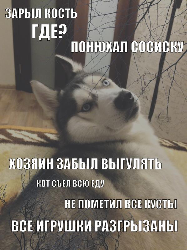 Собачьи вопросы