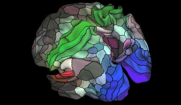 В мозге человека обнаружили сто неизвестных областей Новости, МОзг, Наука