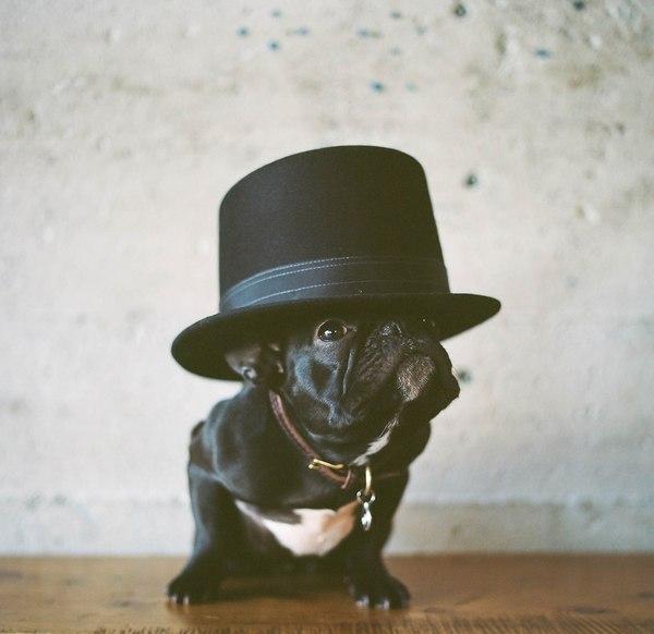 Пирожок Пирожок, Собака