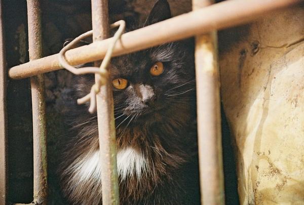 Бездомные животные Кот, Собака, Фотография