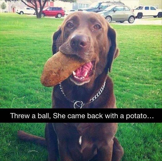 Внесла свою лепту в обеспечение семьи пропитанием собака, мячи, картофель, апорт, кормилица