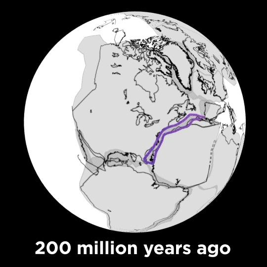 Почему теория эволюции не становится законом Наука, Биология, Теория эволюции, Эволюция, Чарльз Дарвин, Гифка, Длиннопост
