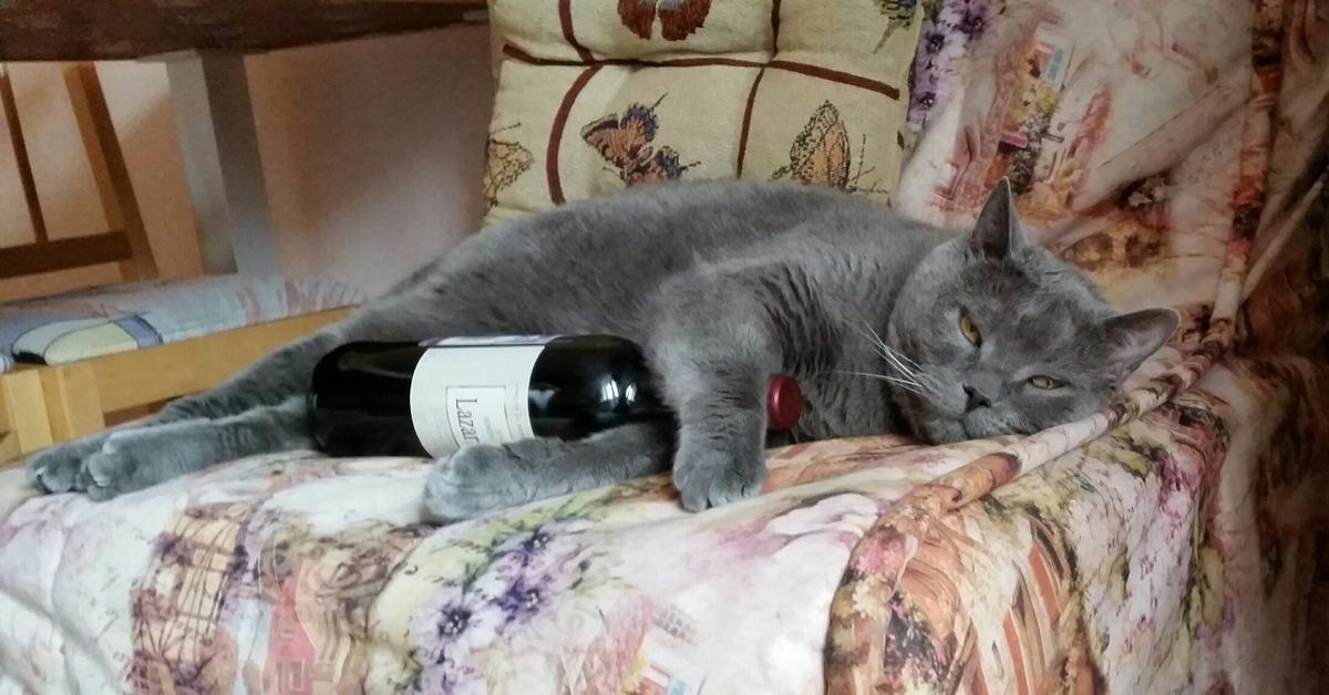 Пьяный котенок картинки