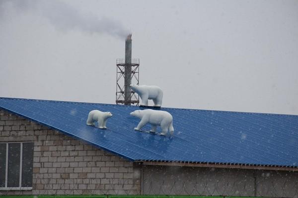 Путешественники с полюса Медведь, Крыша, Птицефабрика, Солигорская птицефарбрика
