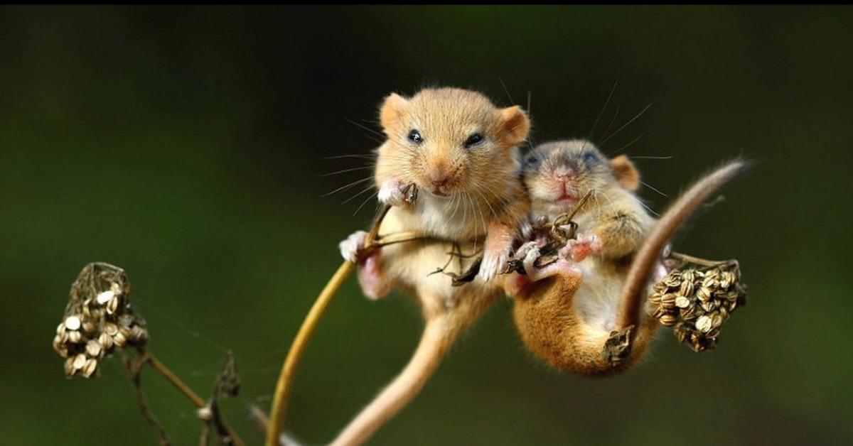 Интересные картинки с мышь
