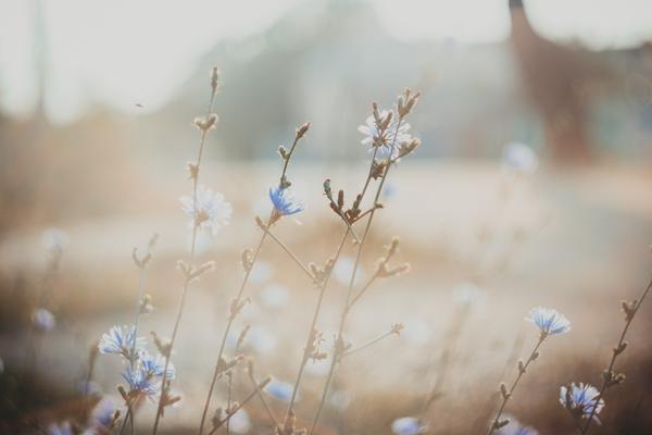 Рассвет :3 утро, dawn, солнце, blue, цветы, beautifully, canon, helios44m4