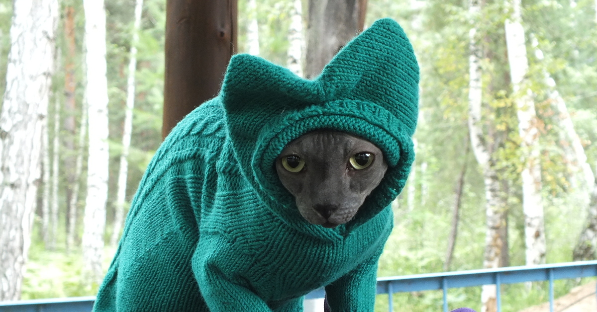 кот в свитере картинка