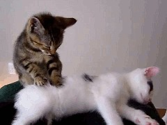 cat sickness diagnosis