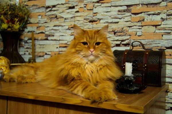 FireCat и другие домочадцы... Firefox, firecat, кот, длиннопост