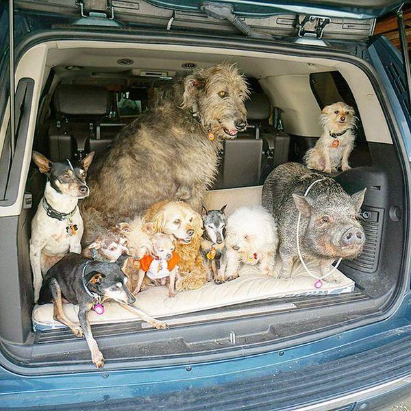 Этот мужчина всю жизнь забирает из приютов пожилых собак, которые не могут найти себе новый дом Собака, Животные, Старость, Приют, Человек, Доброта, Забота, Длиннопост