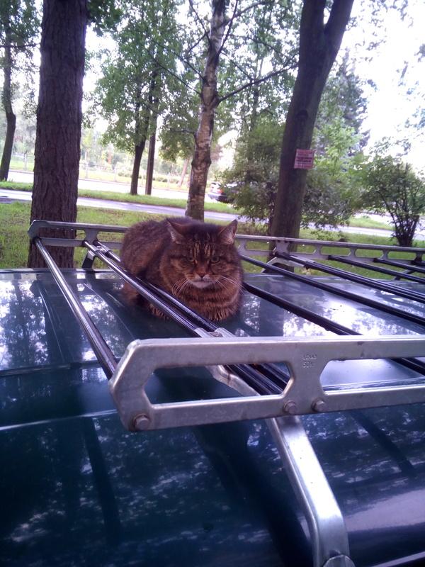 Брутальность кота зашкаливает Кот, Брутальность, Длиннопост