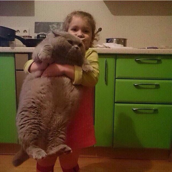 Австралийские ученые разработали модель кота, который может выжить при хватаниях