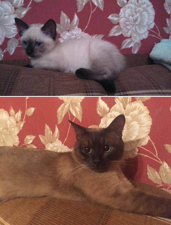 Мой котейка, фото с разницей в один год.