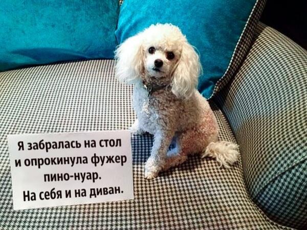 """Из серии """"Понять и простить"""" XD Собака, Собаки и люди, Простите меня, Длиннопост"""