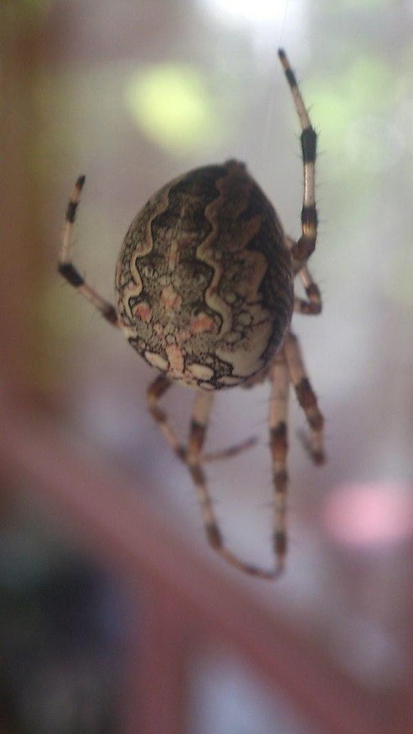 По следам лайфхаков паук, смартфон, объектив, длиннопост