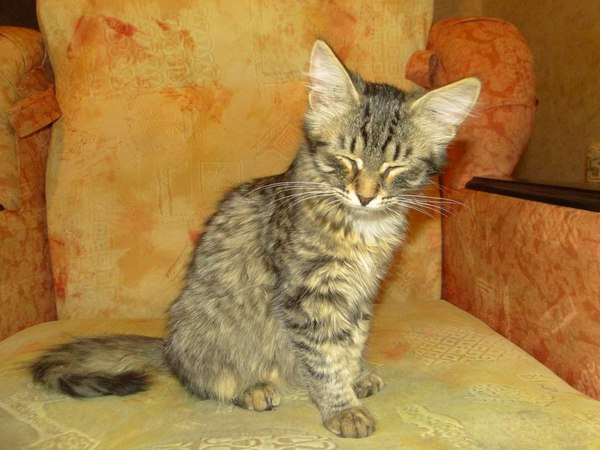 Было-стало было-стало, кот, выросла, длиннопост