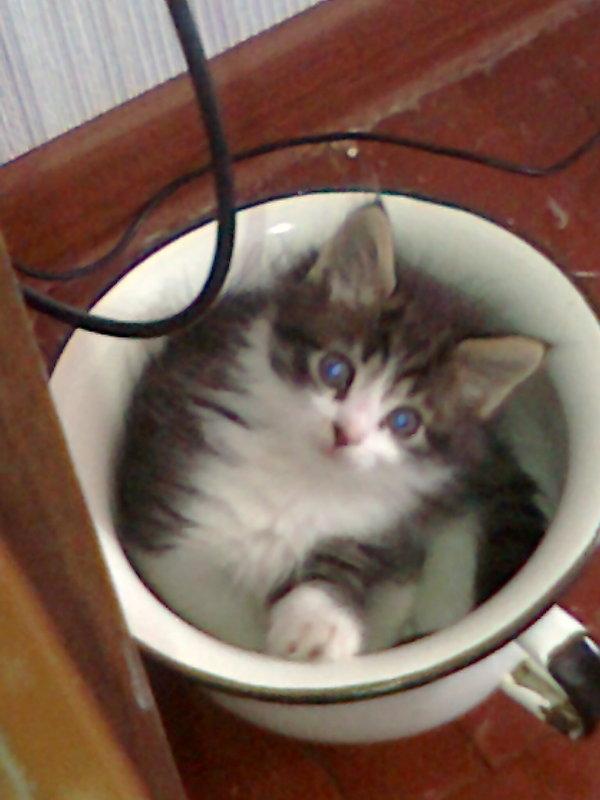 Кот по имени Джойстик Кот, Было-Стало, Моё, Фото, Кот по имени Джойстик, Фотки на тапки, Длиннопост