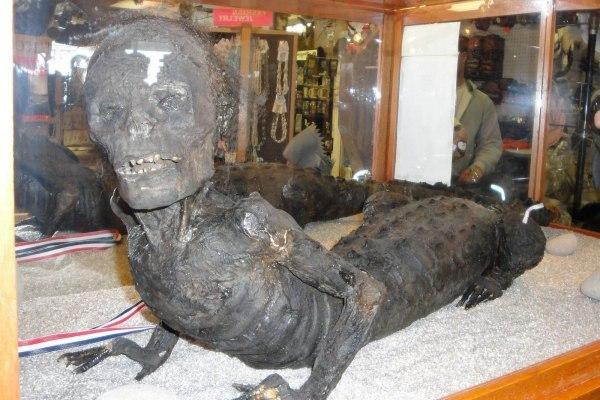 Тайна происхождения человека-аллигатора Крипота, Человек-Аллигатор