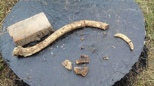 Всё таки бивень мамонта мы тогда откопали :) Кости, Раскопки, Мамонт, Находка, Моё