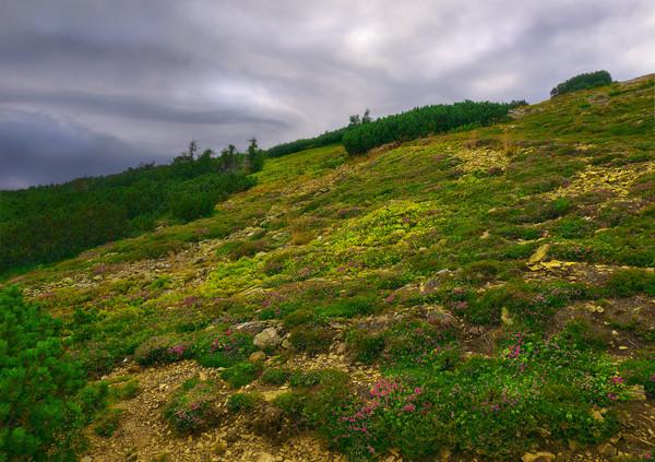 Чешская тундра Чехия, горы, вертикальная зональность, тундра, Фото