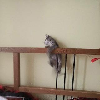 Грациозная кошатина. Кот, Обезьяна, Гифка, Смешное