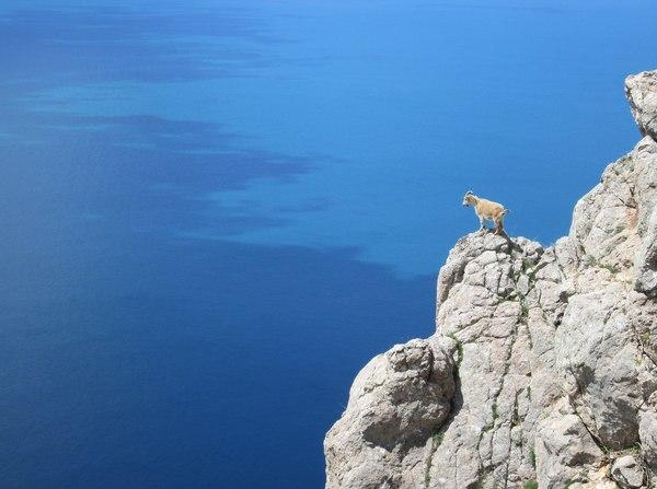 Горный козел и море
