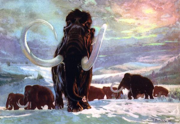 Возрождение мамонта Мамонт, Клонирование, Кости, Палеонтология, Длиннопост
