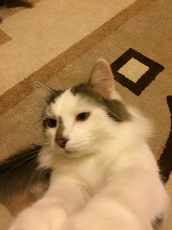 Марьино.кот выпал из окна.если кто видел просьба сообщить по номеру 8 (926) 910-89-55 Кот, Пропал, Марьино, Длиннопост, Помощь, Разыскивается