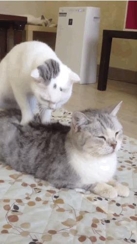 Котейка-массажист