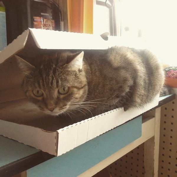 Котя любит коробки. Кот, Пирог, Коробка