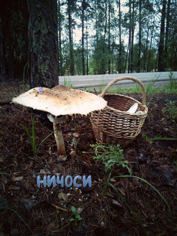 Гигантский гриб Тихая охота, Грибы, Идиотизм, Длиннопост