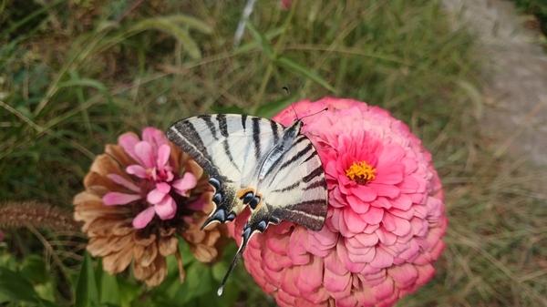Бабочка Бабочка, Цветы