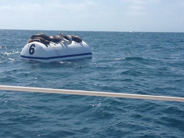Это моя лодка сэр,но Я немного устал...