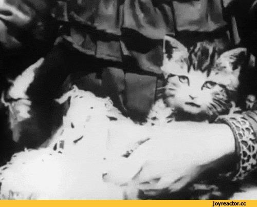Одно из первых видео с котейкой. Кот, Видео, Ретро, Гифка