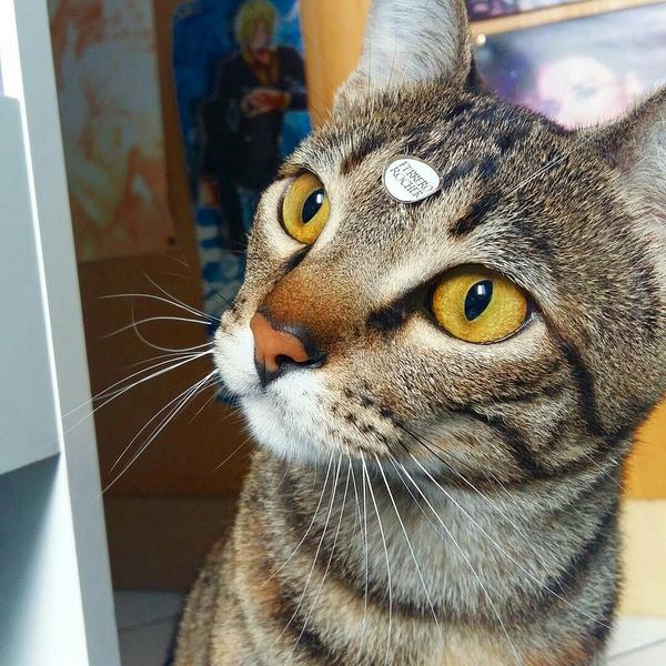 Обожаю клеить на своего кота разные наклейки. А ему идёт...